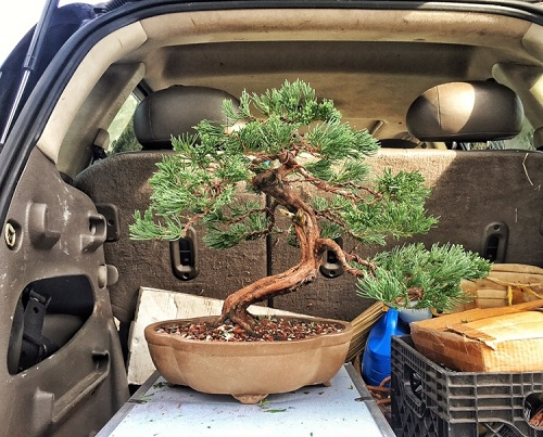 Plants You Can Grow in Car 3