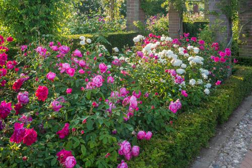 Amazing Flower Bed Ideas for Your Home Garden 13