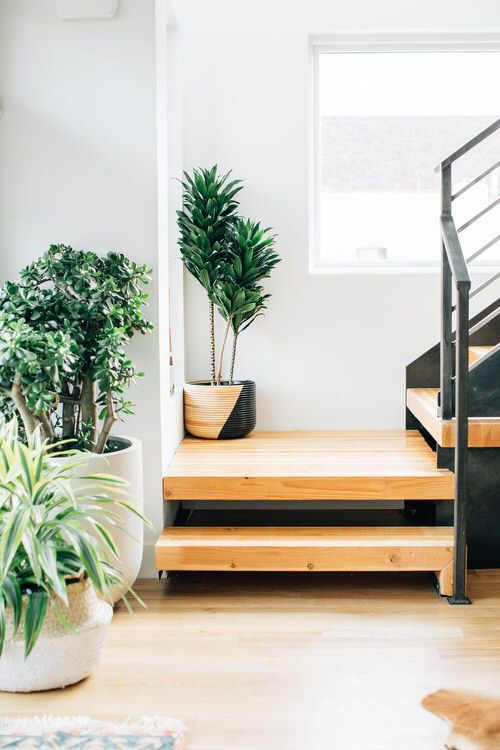 Indoor Garden on the Staircase 27