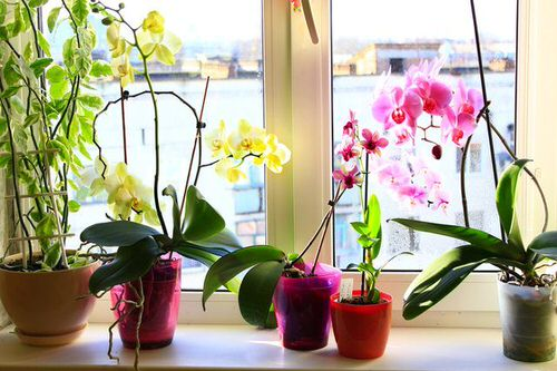 Common Orchid Growing Mistakes 2