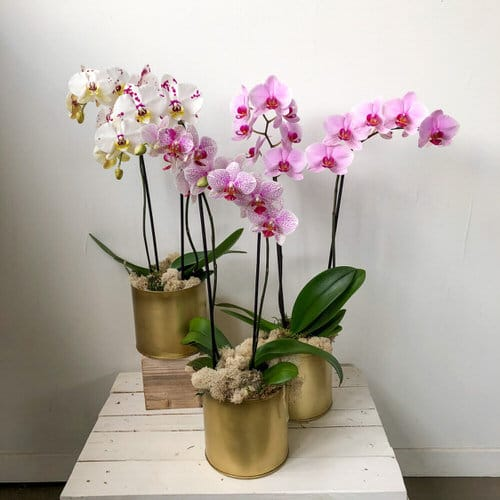 Common Orchid Growing Mistakes 3