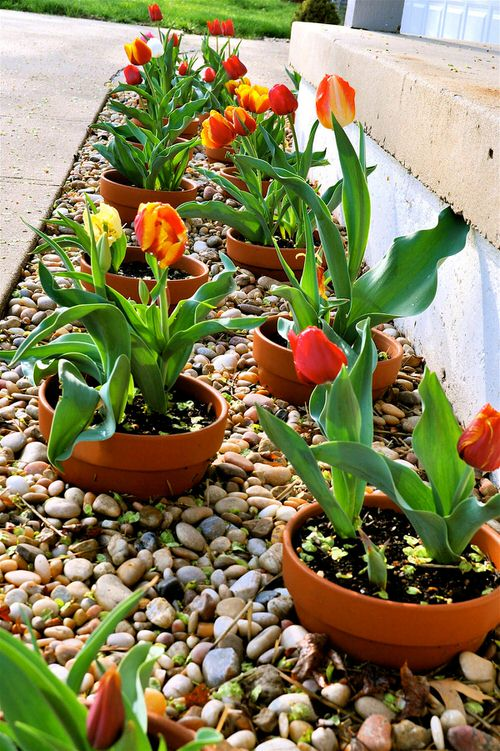 Amazing Flower Bed Ideas for Your Home Garden 8
