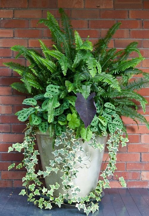 Front Porch Decoration Ideas with Ferns 5